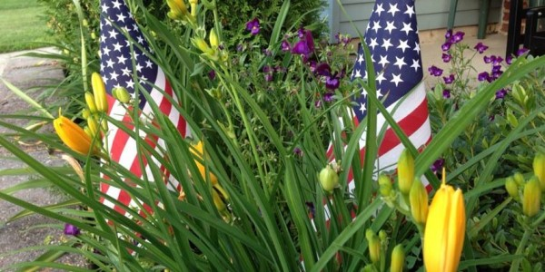 The American Flags in our Garden